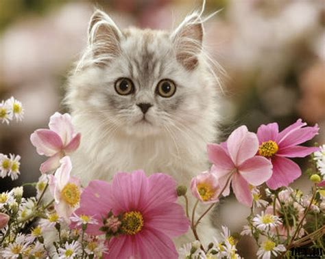 wallpaper 3d kucing abdulmuin kucing yang cute 34 gambar