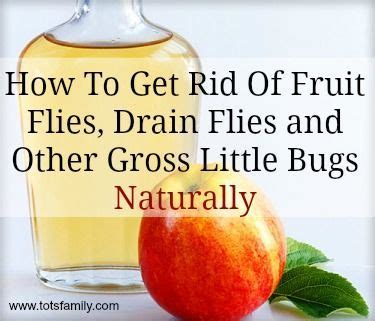 How To Get Rid Of Flies Outside The House by 17 Best Images About For The Home On Ina Garten Wagons And Colorful Kitchens