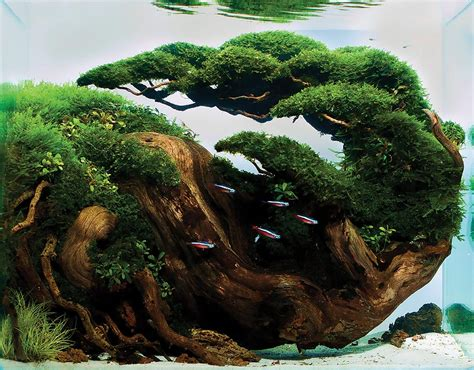 Aquascape Wood by Unbounded Passions Aquatic Gardeners Aquascape Winners