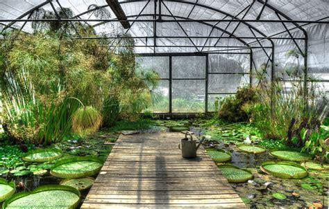 Sustainable House By The Pond Free Photo Lotus Greenhouse Waterlily Free Image On