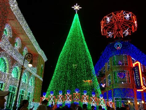 christmas trees around disney world wdw fan zone