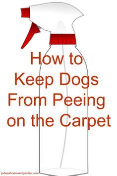 how to keep dogs from peeing in the house what to spray on carpet to keep dogs from peeing acetic