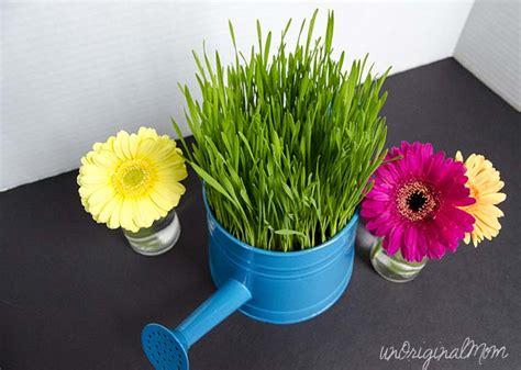 wheat grass centerpieces wheat grass centerpieces unoriginal