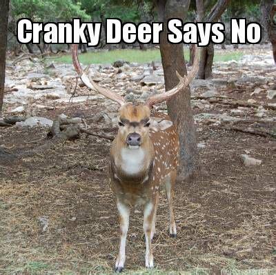 Funny Deer Hunting Memes - meme maker cranky deer meme maker lul 3 pinterest