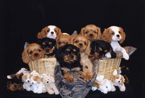 basket of puppies basket of puppies foto 2017