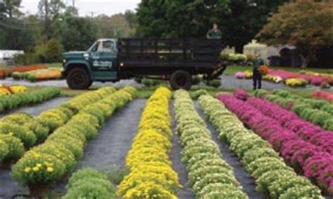 Garden Center Cromwell Ct Garden Centers In Ct List Of Nurseries And Garden Centers