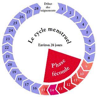 Calendrier Ovulation Et Regle Tout Sur Le Cycle Menstruel Et L Ovulation Calendrier