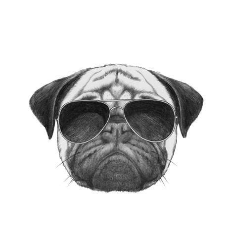 pug with goggles original drawing of pug with sunglasses isolated on white background posters by