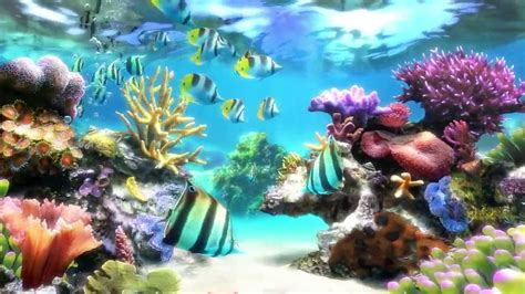 Desk Top Aquarium by Marine Aquarium Hd Desktop Wallpapers 7wallpapers Net