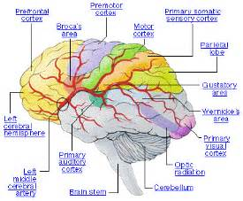brain epilepsy awareness program middle east