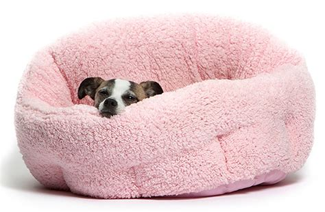 girl dog beds best small dog beds reviews and tips for choosing the right one