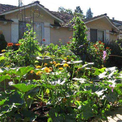permaculture front yard design the permaculture revolution takes root in cities on the