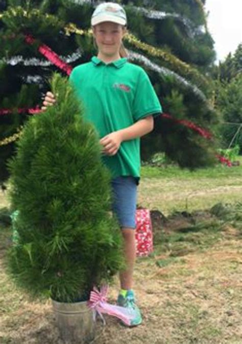about misa christmas tree farm