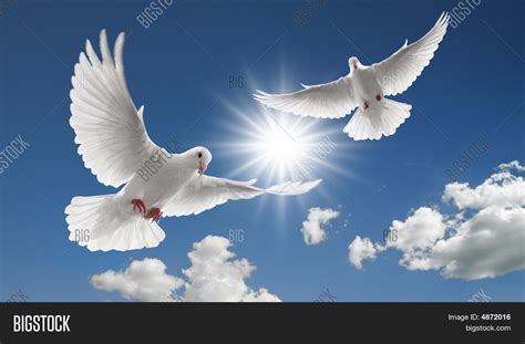 two flying doves image photo bigstock