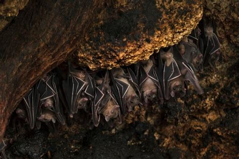 top 10 places to see bats around the world travel channel
