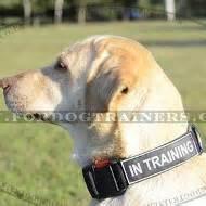 colorado puppy rescue co alimentos para perros labrador puppy rescue colorado