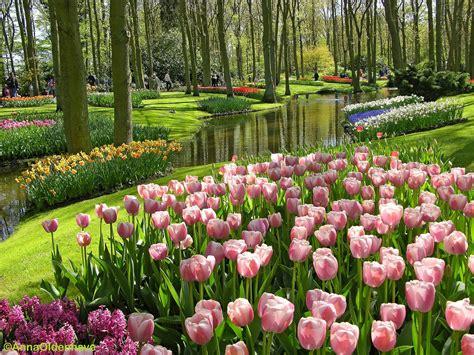 wallpaper bunga paling cantik gambar gambar bunga yang indah paling cantik dipandang