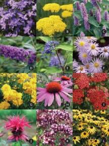 Flowers For Butterfly Garden Butterfly Garden Bluestone Perennials
