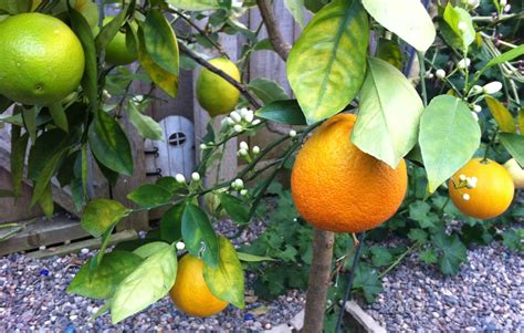 salad fruit tree 4 awesome lawn and garden ideas jobber