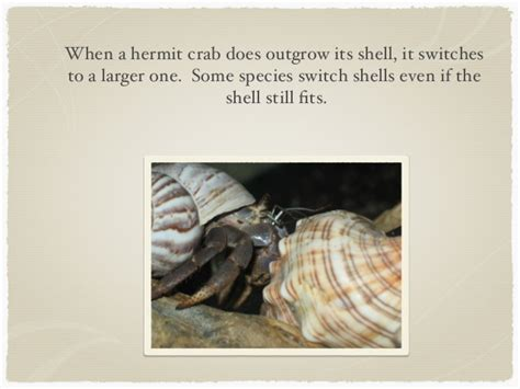 Do Crabs Shed Their Skin by Hermit Crabs