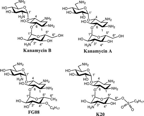 Aminoglycosides Also Search For Frontiers Antifungal Hiphilic Aminoglycoside K20 Bioactivities And Mechanism Of