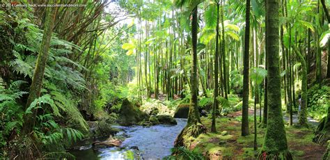 Hawaii Tropical Botanical Garden by Hawaii Tropical Botanical Garden For Finding Some Real