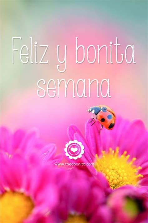 Bonita Pink Batik 298 best images about greetings on sweet dreams you all and sweet