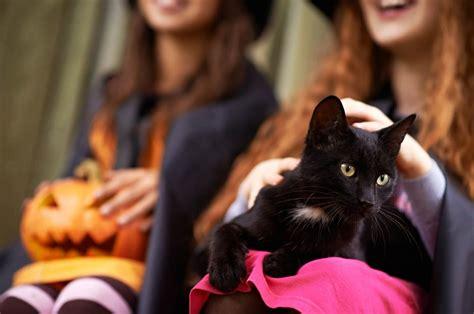 Cat Cp Lidya Black costume ideas cat s pride
