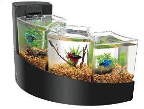 Aquarium Hias Gelas Antik model akuarium modern untuk ikan cupang hias dunia akuarium
