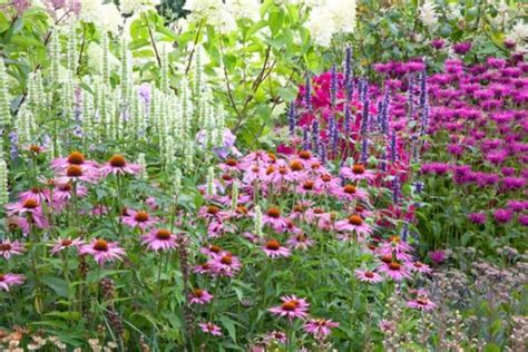 garden ideas border ideas perennial planting perennial combination summer borders fall