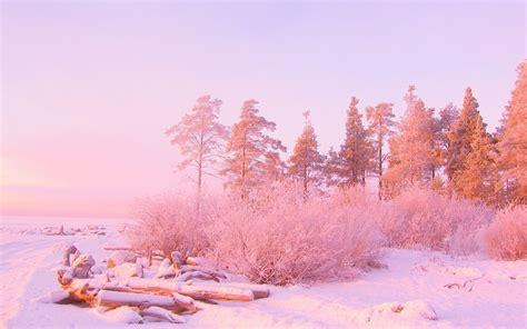 invierno naturaleza nieve rosa