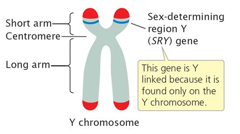 disease on y chromosome the sry gene is on the y chromosome and causes the