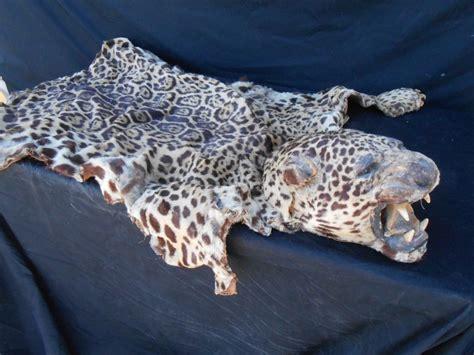 antique jaguar antique jaguar