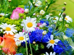 Spring Flowers Pictures Spring Flowers Related Keywords Amp Suggestions Spring
