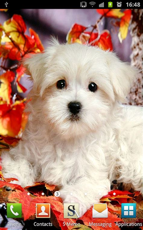 dog wallpapers pictures cute dogs on the app store cute puppies wallpapers android apps on google play