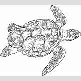 Hawaiian Sea Turtle Clipart | 2400 x 2094 png 391kB
