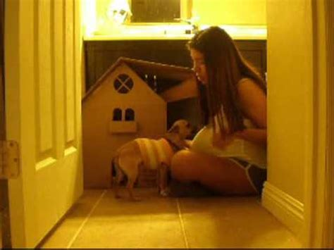 dog house cardboard dog cardboard house martha stewart inspired cat cardboard house youtube