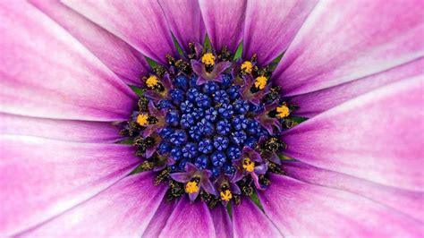 wallpaper flower macro flowers macro hd wallpapers