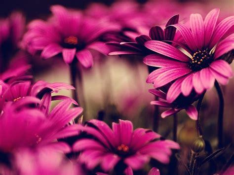 fb gratis fb covers flores fondo de pantalla fondos de pantalla gratis