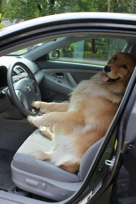 driving school headboards 49 best hungry animals images on pinterest funny animals