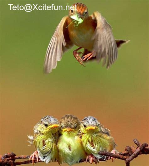 my birds pics feeding time for small birds