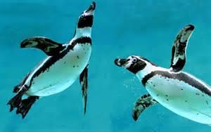schwimmbad pinguine junior tierquiz zu pinguinen junior die kinderzeitschrift