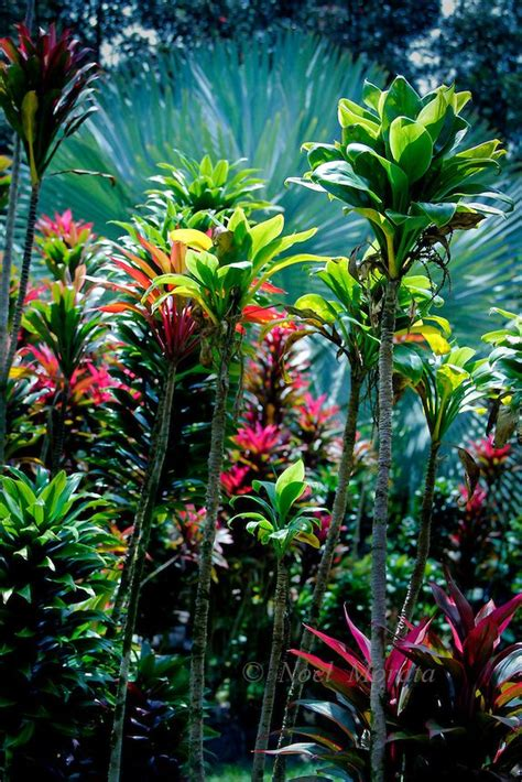 Hawaiian Flower Gardens Garden Things Outdoor Life Tropical Flower Garden