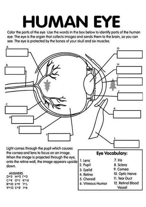 top  anatomy coloring pages   toddler coloring