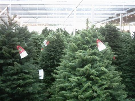 team run smart christmas trees boost rates in unexpected