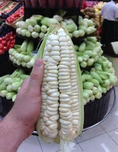 Flower Stores New Rare Heirloom Peruvian Giant White Corn Choclo Cuzco Maize Zea Mays Var Cuscoensis 40 Seeds