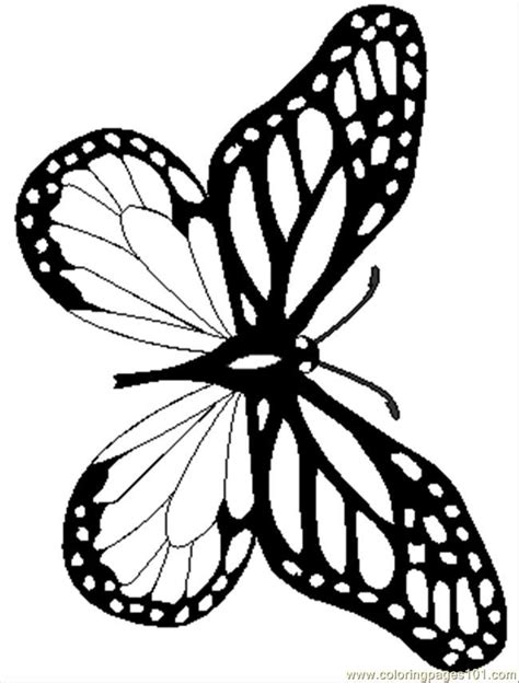 butterfly coloring page pdf 7 pics of realistic butterfly coloring page monarch