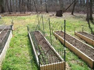 trellis peas march 2010 food garden kitchen