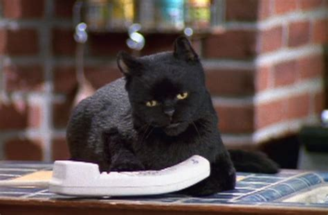 Cat Salem 10 times salem the cat said what we were really thinking