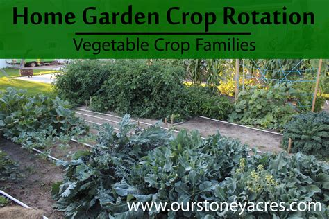 Garden Crop Rotation Vegetable Crop Families Stoney Acres Crop Rotation Home Vegetable Garden